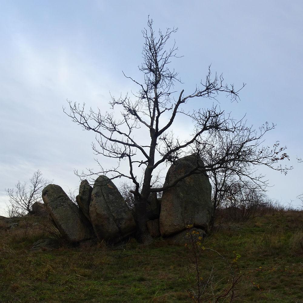 Baum schlägt Stein