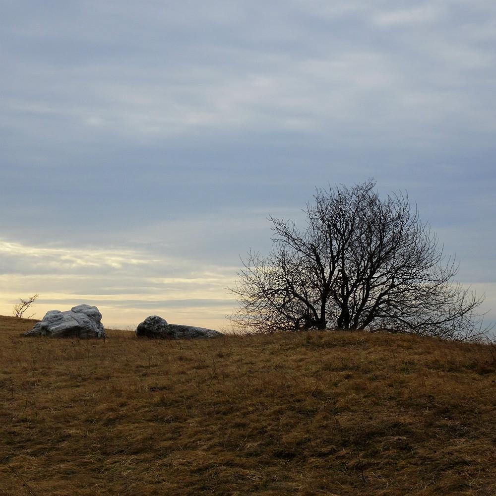 Steppenrasen mit Aussicht