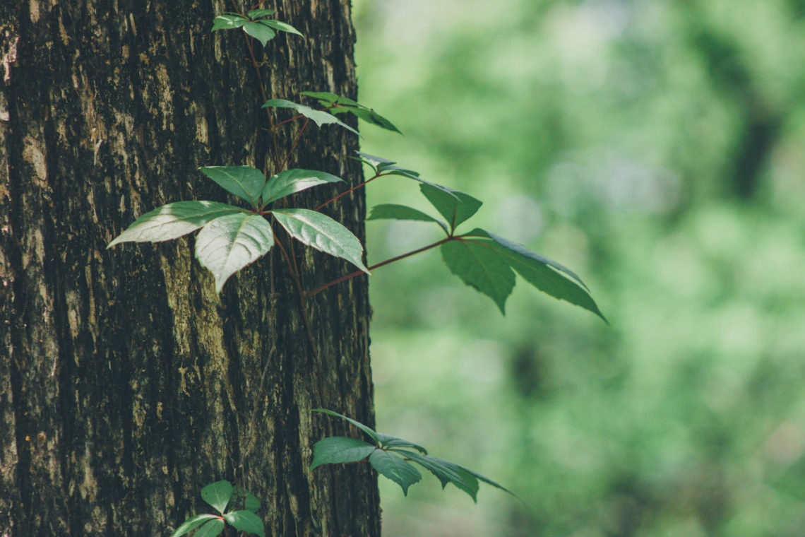 Bäume bringen Glück