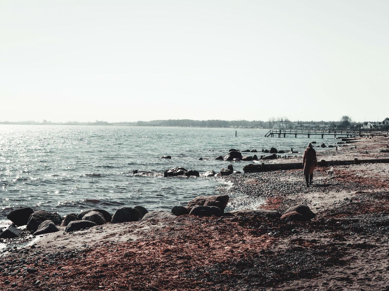 Strandspaziergang mit Hund in Nyborg