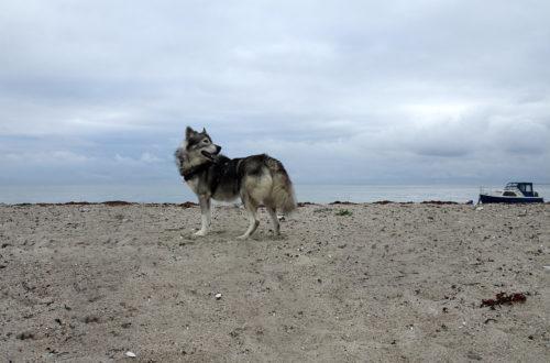 Gandalf am Strand