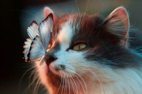 Schmetterling und Katze
