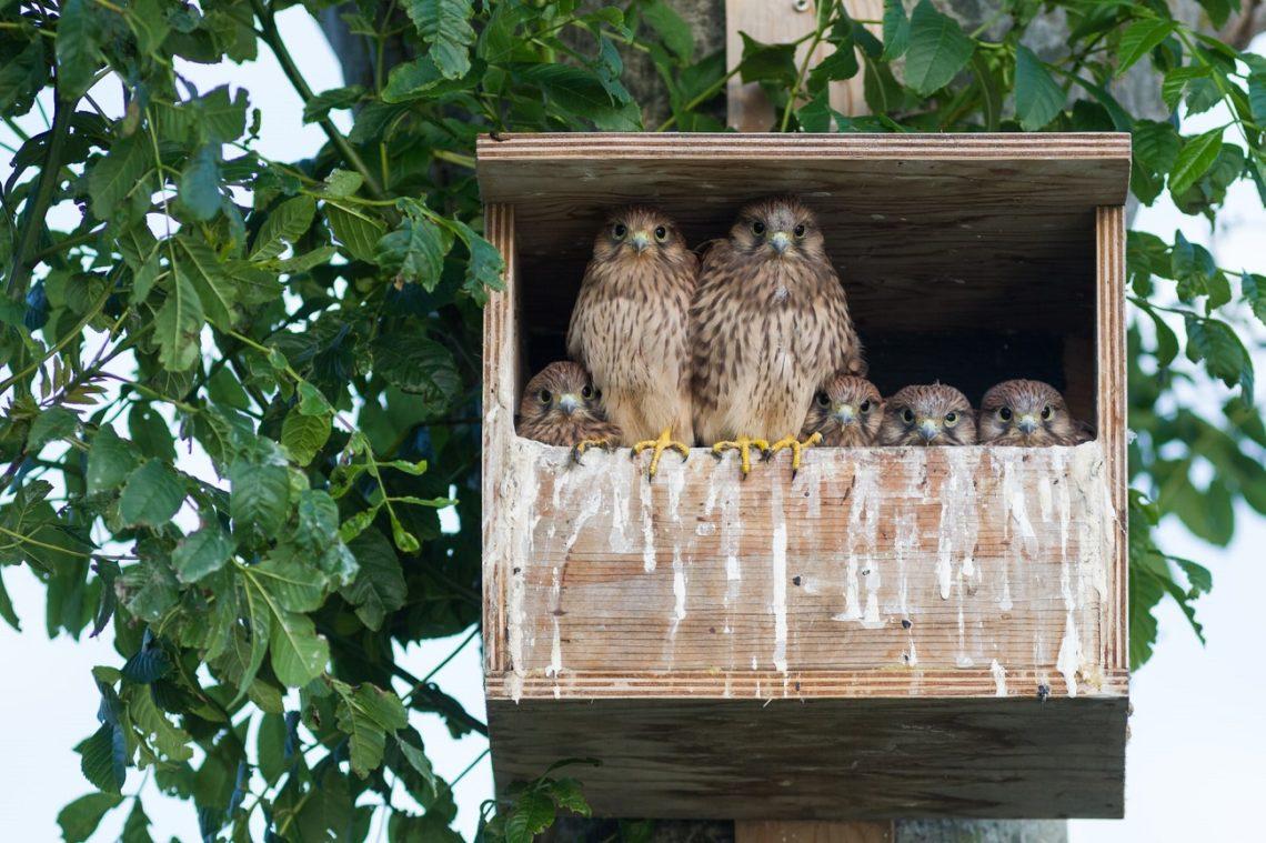 Falkenfamilie